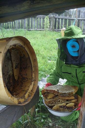 Как сделать борть для пчел